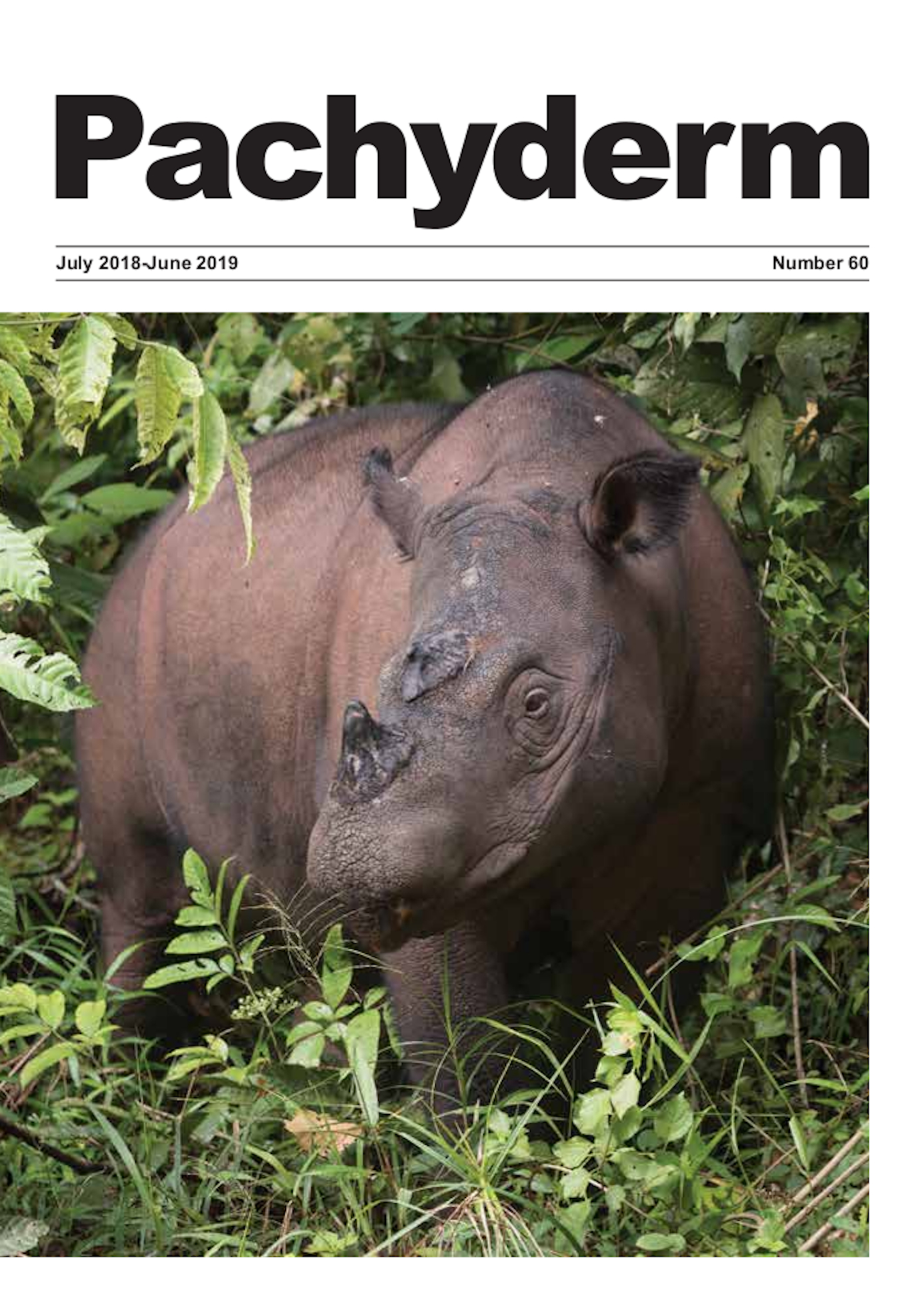 Cover caption: Sumatran Rhino at the Sumatran Rhino Sanctuary in Way Kambas National Park, Indonesia. ©International Rhino Foundation