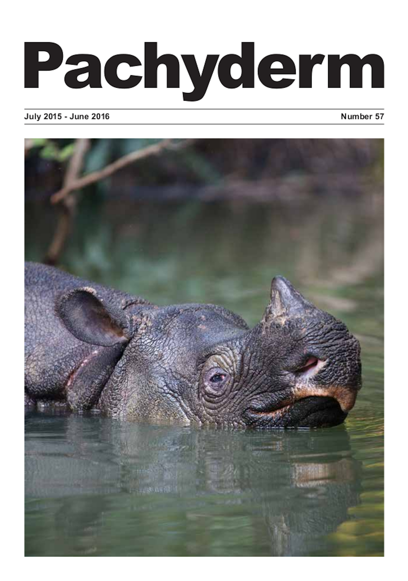 "Cover caption: Javan Rhino Ujung Kulon National Park (UKNP): The Javan rhinos live in impenetrable jungle, which makes it very difficult to see them, and as they are solitary and reclusive it makes photographing them even more difficult. It took 28 porters and hours of trekking to reach UKNP. Stephen Belcher describes the experience, his biggest challenge to date: ""My most successful method of capturing Javan rhino on camera was using a small inflatable canoe to quietly move down the rivers. This paid off with the image used on the front cover. It was above 30°C during the time I was photographing and a large insect was biting my right arm, which I couldn't swat off as any movement might have disturbed the rhino"". © Stephen Belcher 2014"