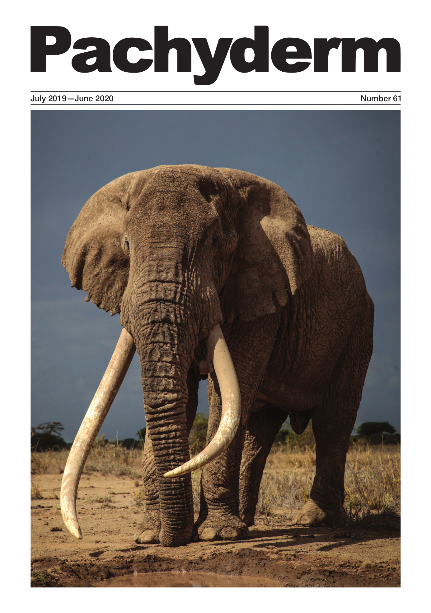 "Cover caption: ""Tim"" (1970–2020), one of the last remaining iconic ""tusker"" elephants in Kenya died of natural causes in Amboseli National Park in February 2020, aged 50. Tim whose tusks swept the ground was well-known and much-photographed earning significant revenue for the Kenya Wildlife Service from tourism. © Ryan Wilkie"