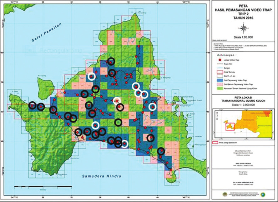 Map of Ujung Kulon NP (peninsula) West Java, Indonesia, with grid system overlaid, and, locations of camera traps (red dots). White circles = wallow locations of camera recordings, Black circles = forest locations of camera recordings. Map courtesy UKNP Authority.